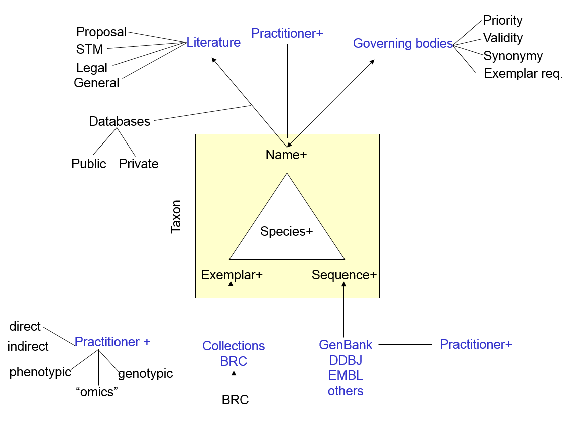 The N4L/Bergamot model and Information Objects provide a transparent middle layer that permanently links together Names and Taxa (at all levels of the hierarchy) with their occurrences in the literature and data repositories.